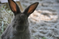 20110522_wildpark__poing_0006