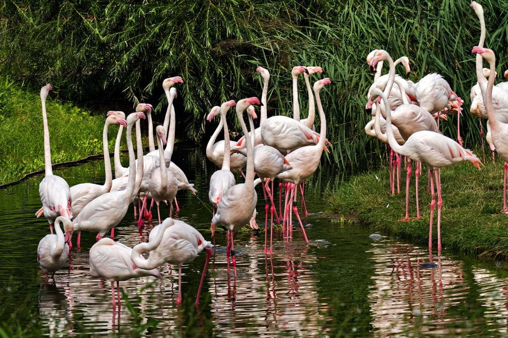 Christian_036_Flamingo_001