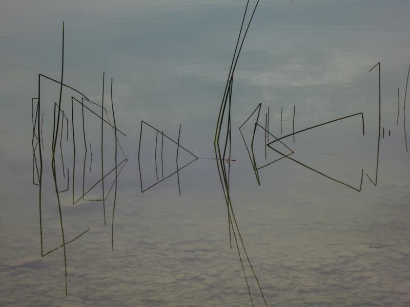 """Franz Weikmann """"Wassergräser-1"""""""