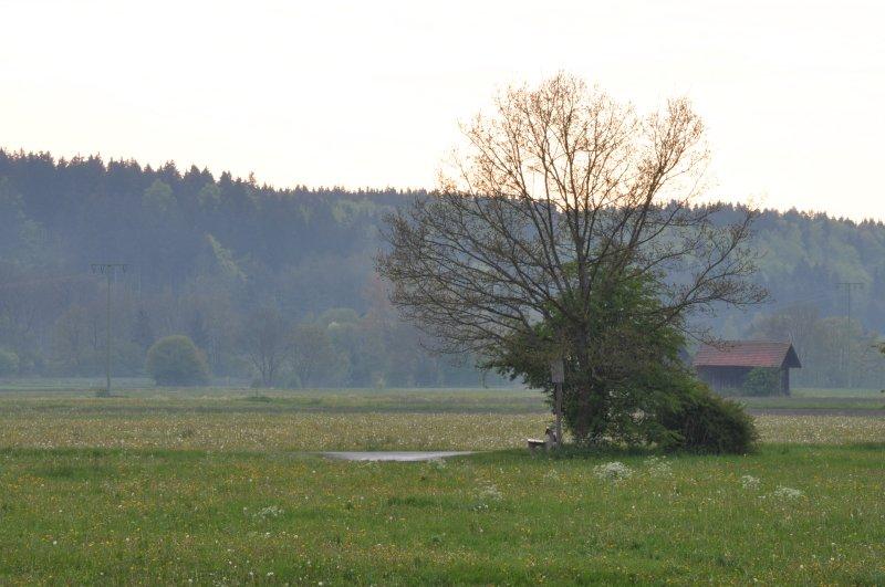 20100517_bachtelsee_0011